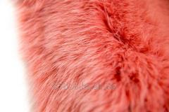 Fur polar fox (Turkey). Color coral 006