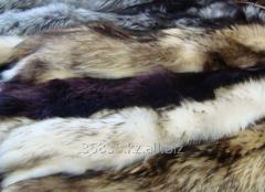 Fur of raccoon 021