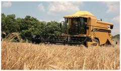 Combine harvester of Challenger 644/647, combine