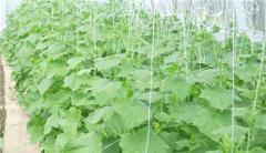 Крючки для подвешивания и регулировки растений