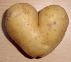 Картофель универсальный