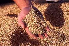 I will sell grain wastes