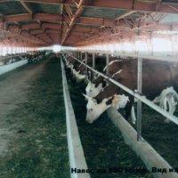 Молоко и продукты его переработки