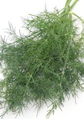 Dill seeds Diamond