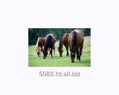 Horse of an akhaltekinskay roadster breed