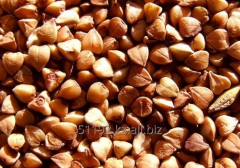 Buckwheat for export, from 1000 t.