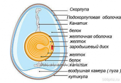 Manual Structure of egg of a bird