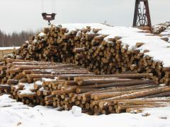 Sawlog, round wood, timber, forest products
