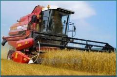 Combine harvester KZS-10K PALESSE GS10