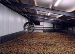 Storage of potatoes