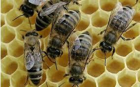 Вощина, Продукция пчеловодства