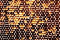 Perga, Production of beekeeping