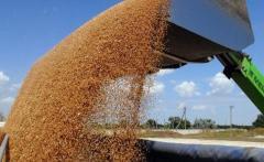 Отходы зерна