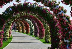Arches from flowers to order