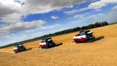 Пшеница Экспорт от 500тн