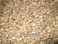 Ядро семян подсолнечника кондитерское, чищенные на Экспорт