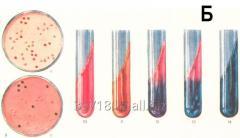 Serum diagnostic hemolytic liquid