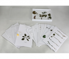 Herbarium on morphology and plant biology