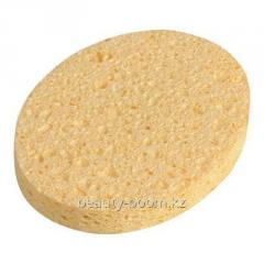 Sponzh for washing of natural porous thick, 1