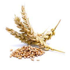 Wheat 4 class
