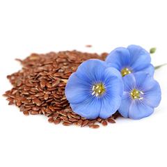 Oil seed flax