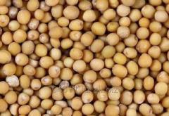 Mustard sareptsky or gray GOST 9159-71