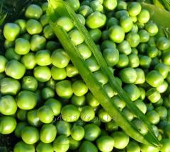 State standard specification 28674-90 peas