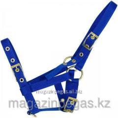 Halter for a foal nylon