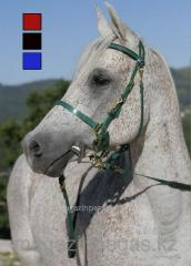 Bridle probezhny Daslo from PVC