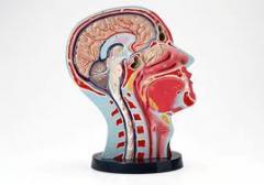 Книги по неврологии