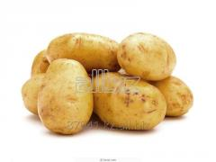 Middle-early potato