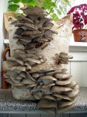 Готовые грибные блоки
