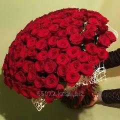 Букет 101 роза красного цвета, высота 50-55 см