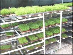 The car for cultivation of a green forage