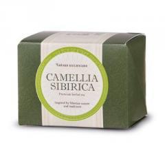Camellia of a sibirik with Kuril tea, the Camellia