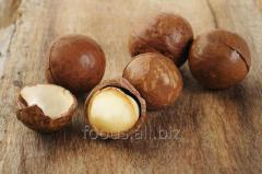 Macadamia in a shell of 1 kg. *10 pieces.