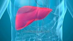 Plaster LI - A healthy liver
