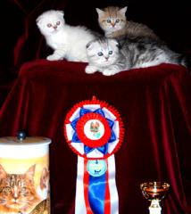 Kittens. Sale of thoroughbred kittens.