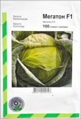 Cabbage seeds Megaton F1 (Holland) in Almaty