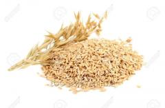 Grain-crops
