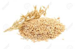 Фуражное зерно, пшеницы, просо, овса, ячменя