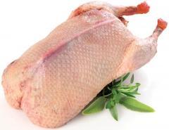 Meat of ducks