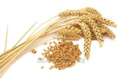 Wheat, soft, 3, 4, 5, class, fodder, export