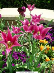 Flower beds from perennials