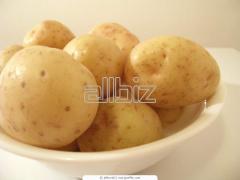 Картофель сверхранний