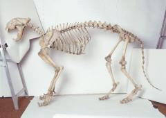 Skeletons of animals and person