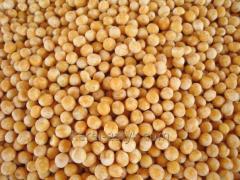Гороховое зерно