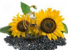 Marketable sunflower