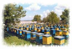 Beehives of Dadan