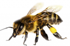 Medicine for the bees
